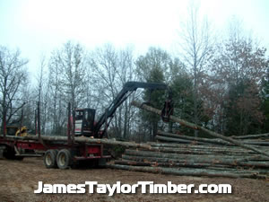 loading logging trucks east texas