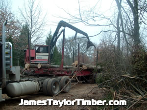 dropping a log onto the pile with boom loader