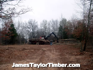 clean logging worksite timber camp in texas